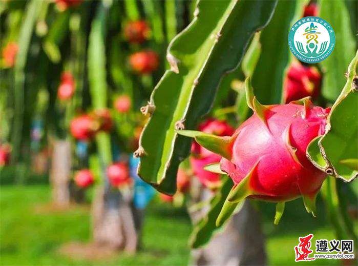 http://www.qguiyang.com/v/b/images/2020/7/10/20207101594353265081_402.png
